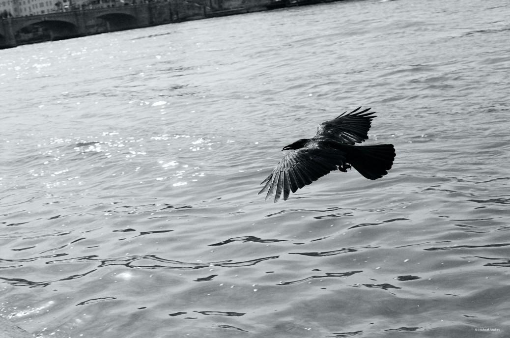 Film - XLVIII - Raven
