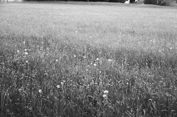 Film - II - summer of motion