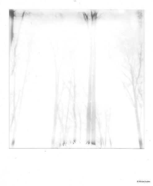 P194 - Winterforest