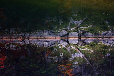 Perspective_Riverscape_Fallenlog_img_2689