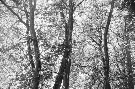 Film - XC - trees in threes